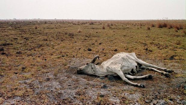 A mayor sequía menos bosque y a menos bosque mayor sequía