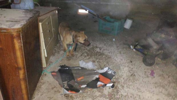 La nueva ley contra la crueldad animal en Costa Rica ha sido aprobada por unanimidad tras cinco años de negociaciones