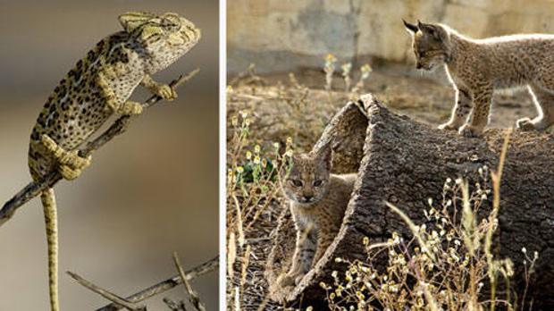 Los científicos han examiando 174 proyectos de conservación que afectan a 82 de las 527 especies españolas