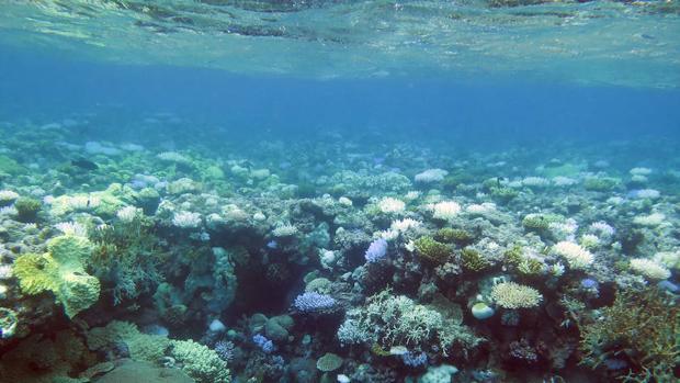 Los episodios de blanqueamiento reducen la diversidad de los peces de arrecifes