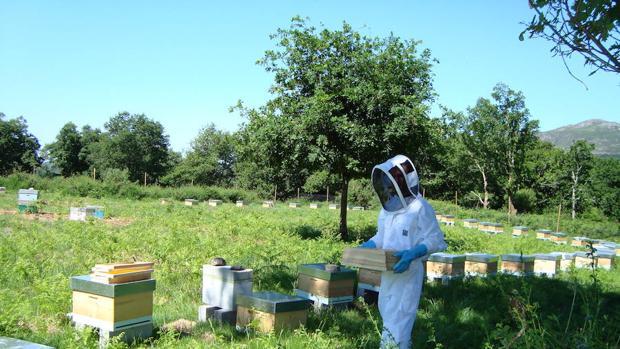 Logran que un enjambre de abejas y un banco de peces se comuniquen entre sí mediante robots