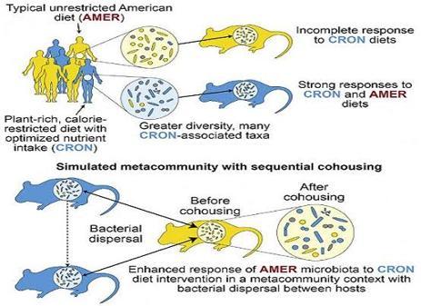 Diagrama del experimento llevado a cabo en el estudio