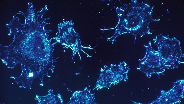 Células canceríngenas