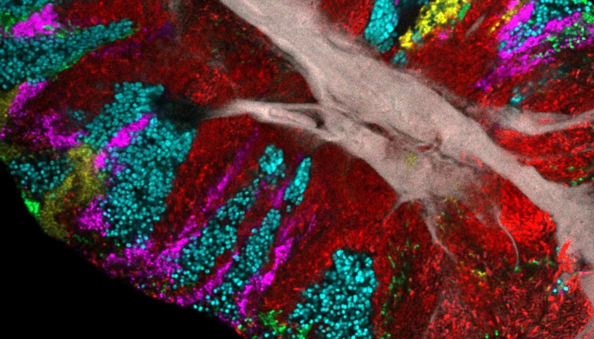 Estas son las bacterias que habitan en nuestra lengua