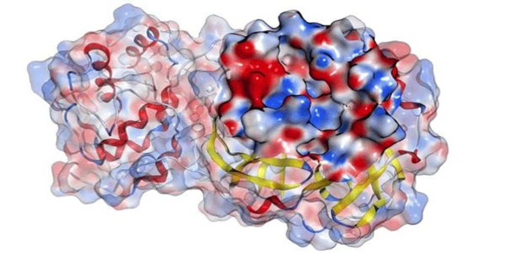 El virus del Covid-19 no se transmite por vía sexual, según un estudio