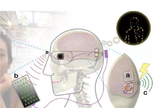 Netherlands Institute of Neurosciences