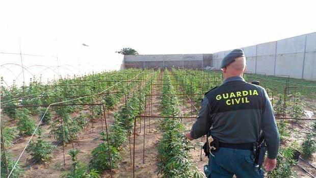 Un agente de la Guardia Civil en una actuación sobre una plantación de marihuana