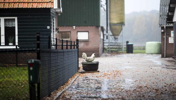 Una granja de aves en Barneveld, Holanda, hoy, 10 de noviembre de 2016. Los avicultores holandeses han recibido la orden de encerrar a sus animales después de que países europeos como Hungría, Alemania, Suiza o Austria informaran sobre casos de gripe aviar en cadáveres de aves silvestres