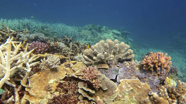 Los Arrecifes de Coral que muestra corales sanos en la Gran Barrera de Australia