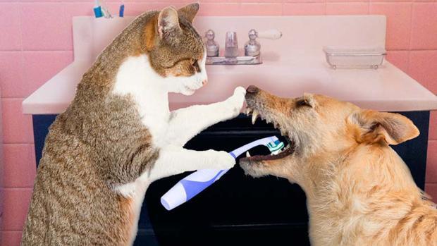 tratamiento para infeccion de orina en perros
