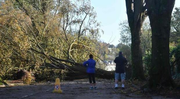 Árboles caídos al suroeste de la ciudad irlandesa de Cork tras el paso de «Ofelia»