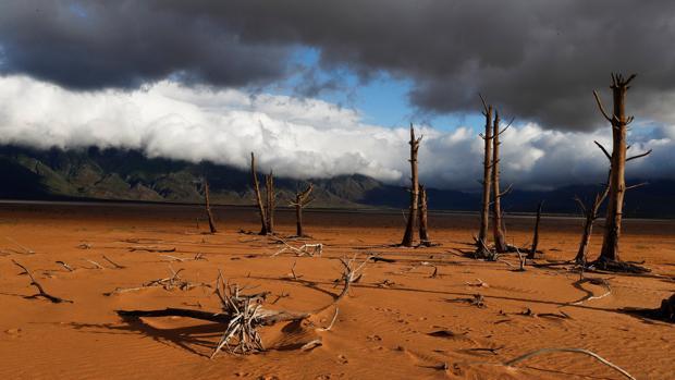 Un tronco de un árbol, que estaba sumergido cuando la presa estaba llena, es visto tras los bajos niveles de la presa de Theewaterskloof en Villiersdorp, Sudáfrica