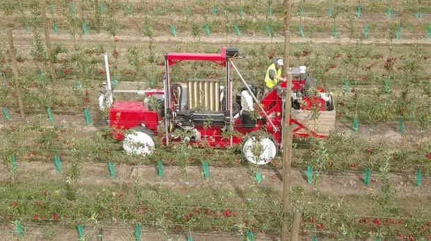 El robot de Abundant Robotics recolectando manzanas en uno de los campos de T&G Global en Nueva Zelanda