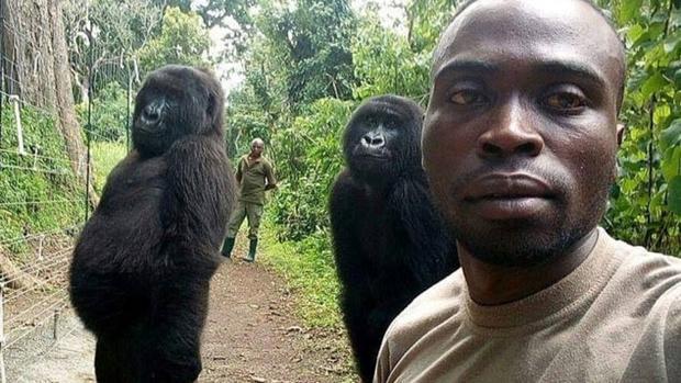Una foto perfecta: el selfi de unos gorilas y guardabosques se vuelve viral