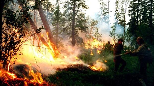 Incendios en Siberia