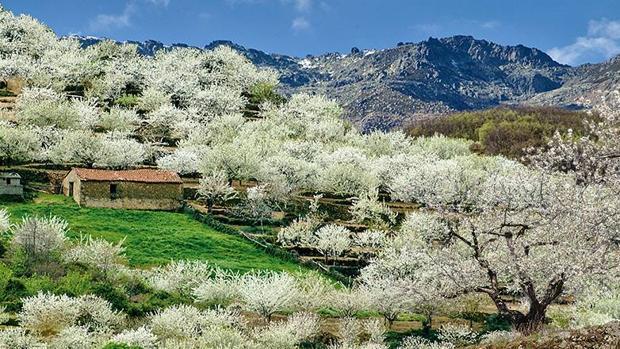 Valle del Jerte: Dónde y cuándo ver los cerezos en flor en el Jerte